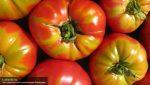 ЦБ: воздействие ограниченийРФ против Турции нарынок продовольствия будет небольшим