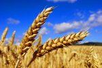 РФ и КНР договорились опоставках зерновых